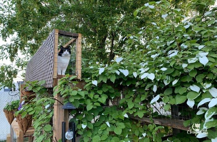 cat bridge lookout diy
