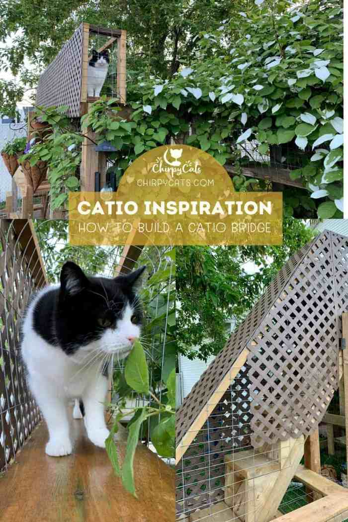 How to build this charming cat bridge that will spruce up your catio