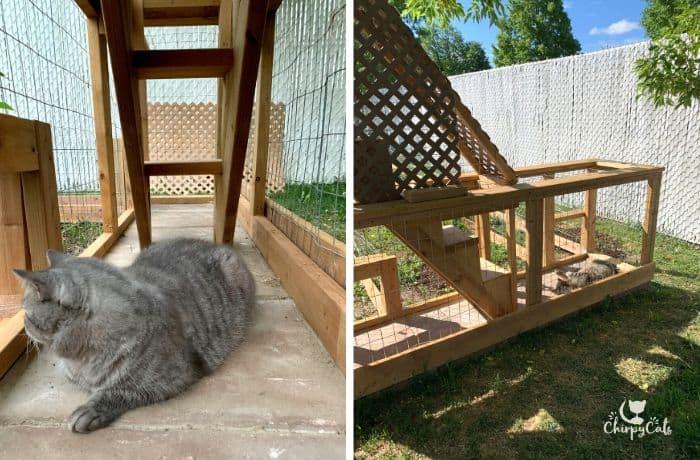 grey cat relaxes on patio stones inside cat enclosure bridge