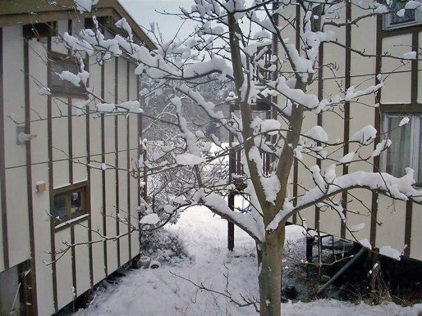 Snow-109