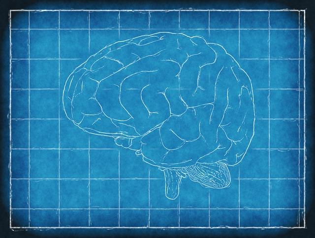 脳の青写真