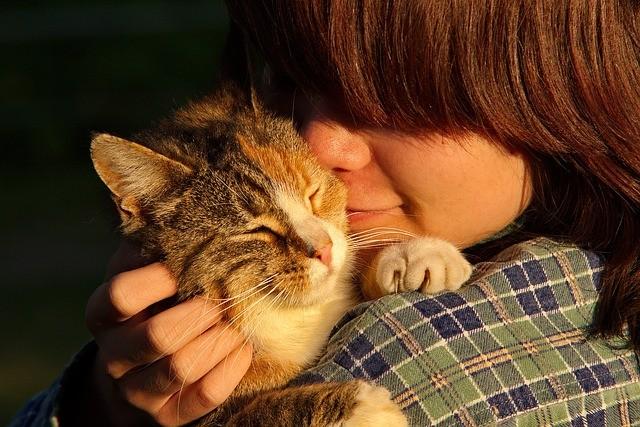 猫を抱く少年