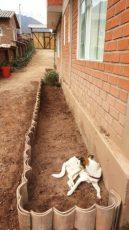ninos garden 2a