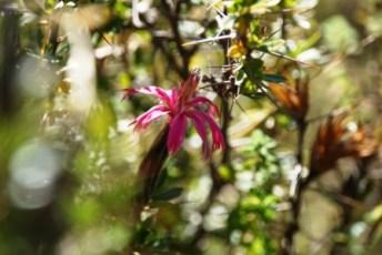 trek2 flowers2 jc