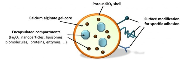 Scheme of silica-coated alginate particle