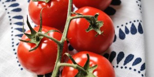 Giveaway: 10 Boxes of Free Tomatoes with Backyard Farms Tomatoes