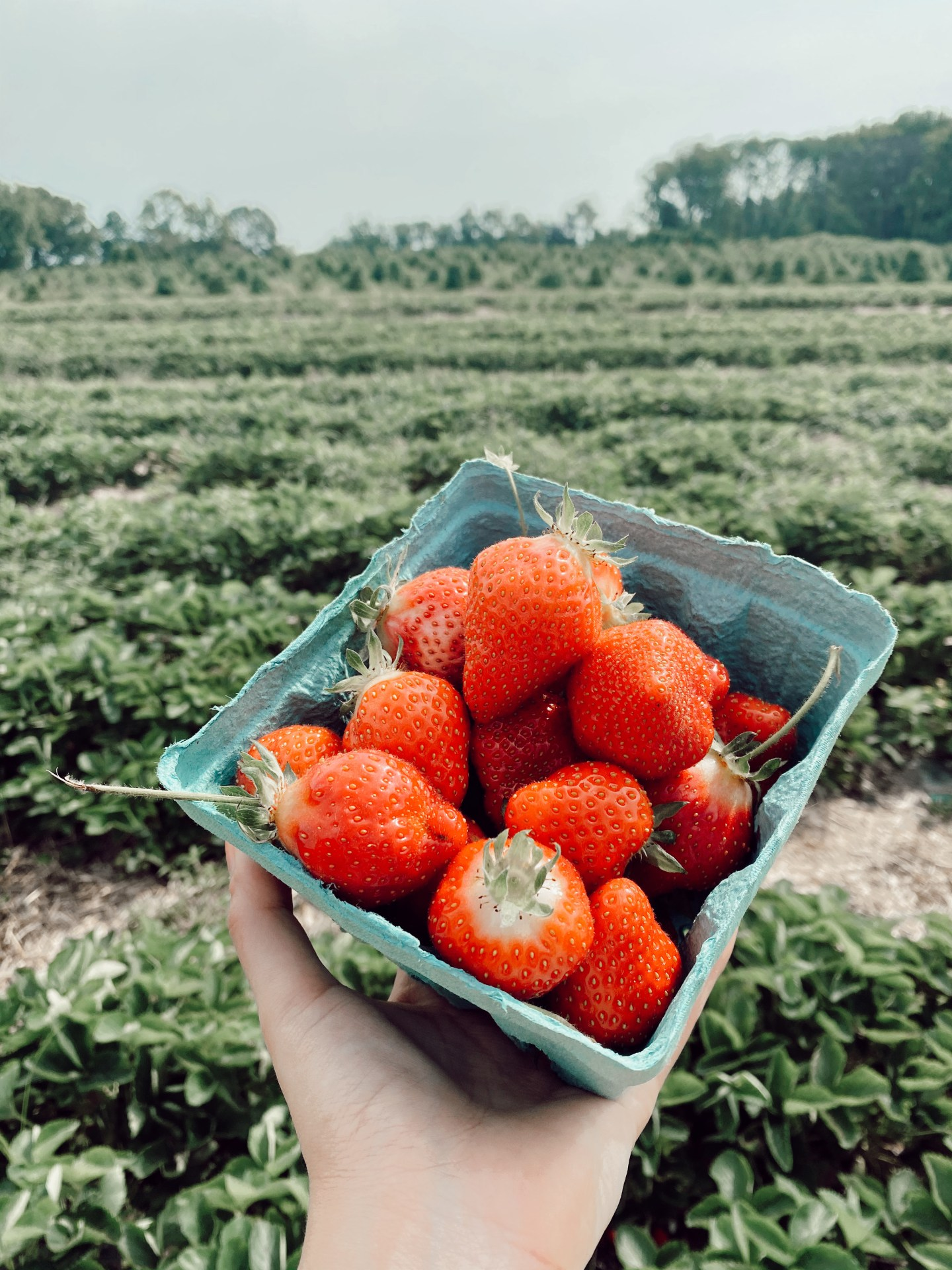 Blogger Chocolate & Lace shares tips for visiting Linvilla Orchards in Pennsylvania.