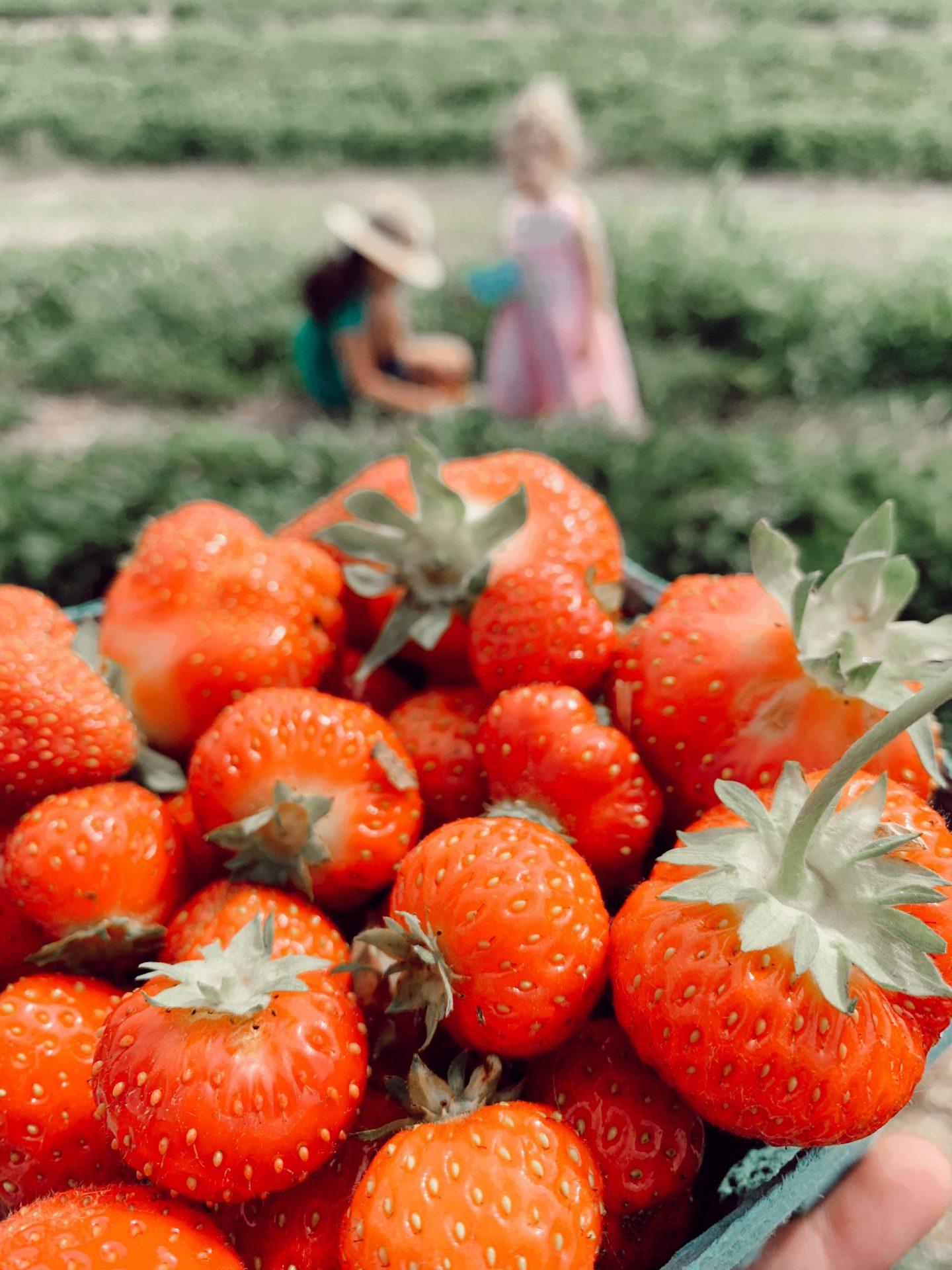 Linvilla Orchards: Visit Guide