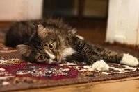 comment nettoyer un tapis en profondeur