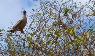 Day trip to Punta Pitt Galapagos