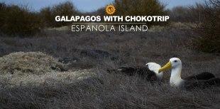 Espanola Island tour Albatros