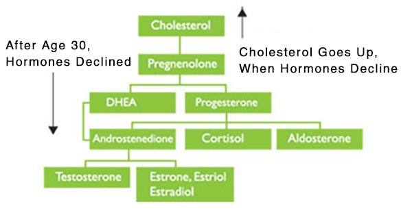 High Cholesterol - Change In Hormones