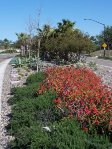 FIRE-UP YOUR PASSION  –  Red plant accents that warm up your landscape