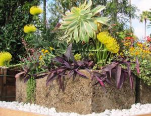 Container garden with sunloving unthirsty plants fit for San Diego climate