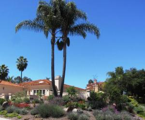 drought-resistant landscaping with desert plant species