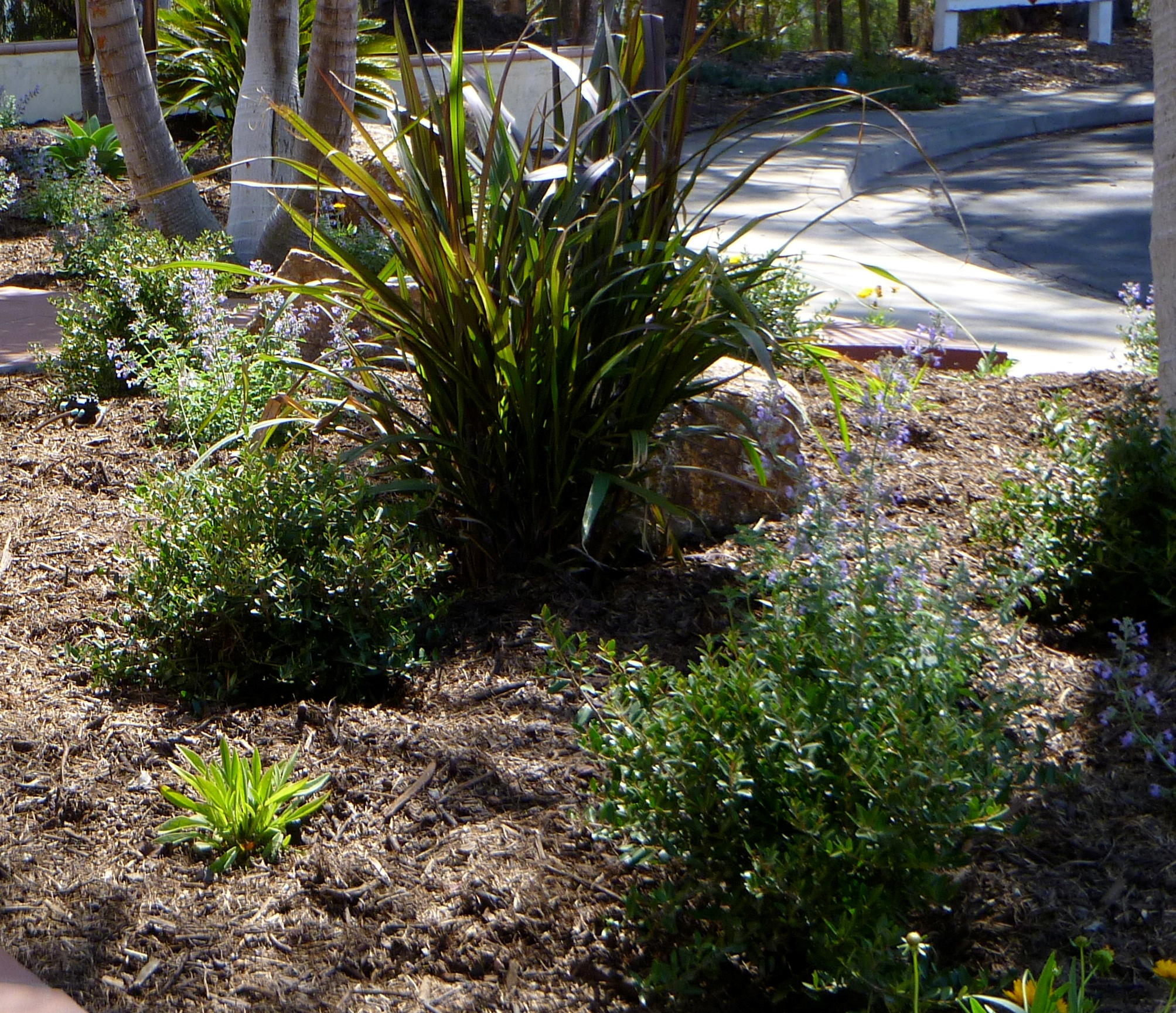 Diy tips for a pretty low water landscape resolve for Purple grasses for landscaping