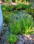 A pond is an enjoyable part of the home landscape design.