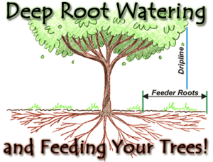 Feeder roots