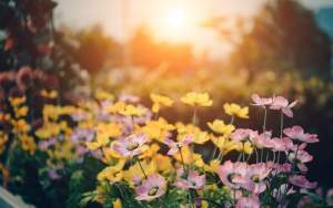 Flowers for cheap gardening ideas