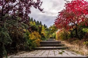 garden during fall