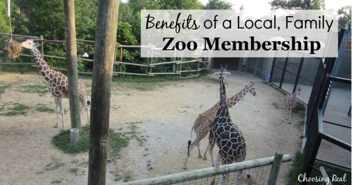 For the past 3 years, my family had a local, family zoo membership, and it was such a pleasure to have that family experience.