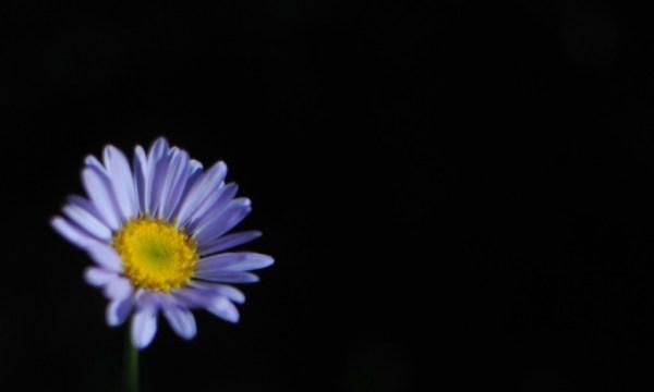 Daisy in darkness