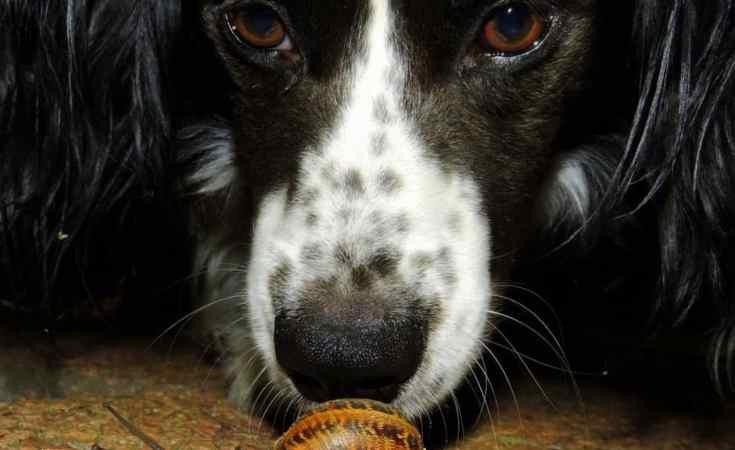 Dog waiting on Snail