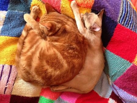 Chorus Cats
