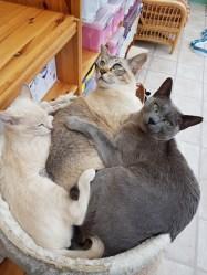 Sylvia, Herc & Monty