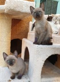 Rollie & Petal