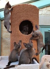 Velcro Kittens...