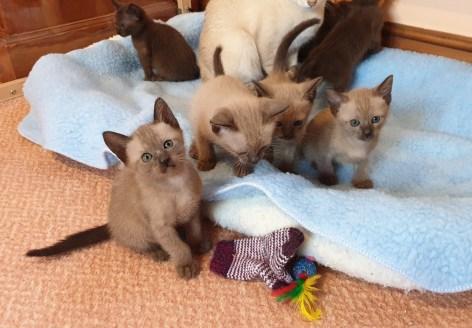 TCR Kittens