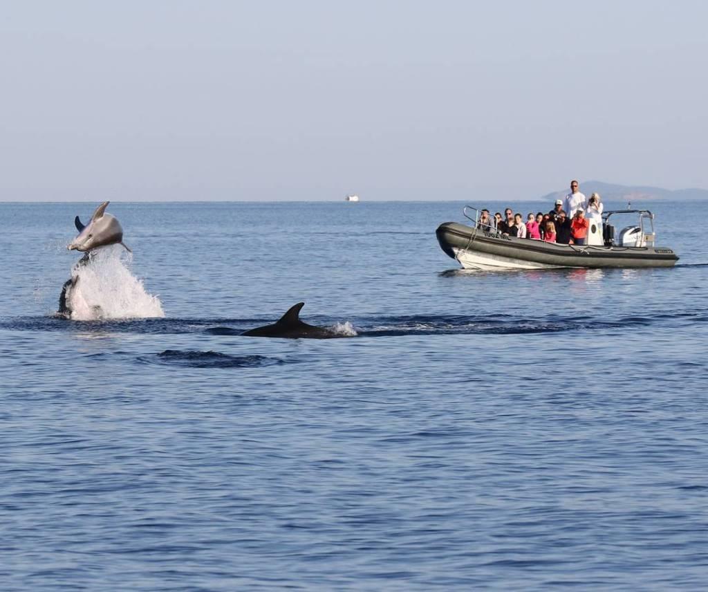 obserwacja delfinów
