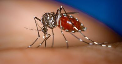 2015-08-27 Dengue Fever