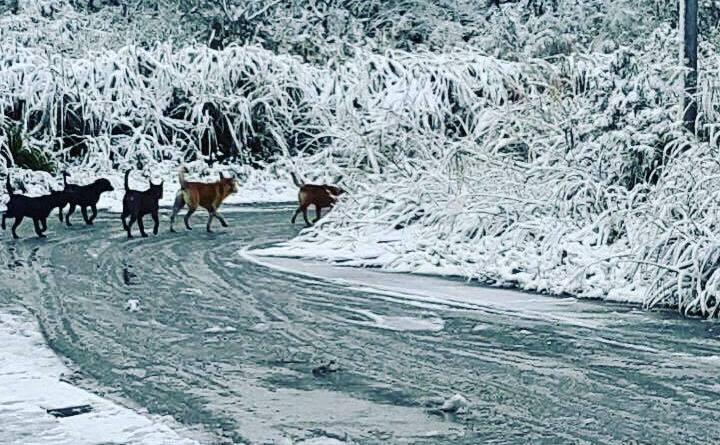 2016-01-24 Snowfall in Yangmingshan