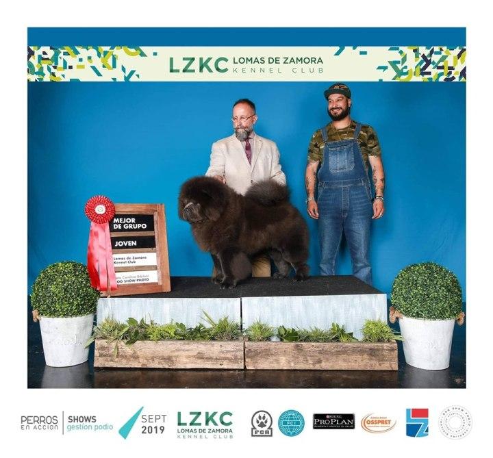 criadero de chow chow cachorros en  España, criador de chow chow en Toledo,