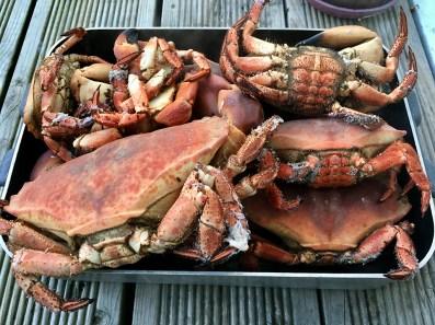 Tjörn Crab