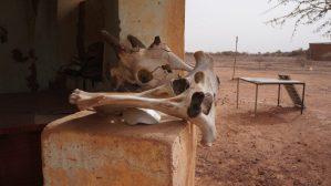 Kouré Niger Giraffe