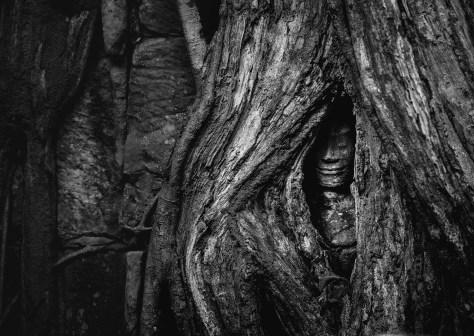 Hidden Apsara in Ta Prohm