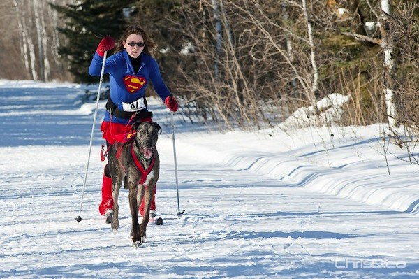 A woman is pulled on skies by a dog during a skijoring race, part of the 2011 Snow Motion Classic at Birds Hill Provincial Park on Sunday, February 13, 2011. (TED GRANT / CHRISD.CA)