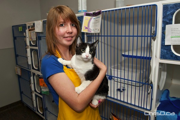 """Haley, a Grade 11 student and volunteer at the Winnipeg Humane Society, holds """"Miracle Mike"""" during a one-day cat sale on Wednesday, May 25, 2011. Mike was tossed from a second storey window in an act of cruelty and was rescued by a good Samaritan. The feline is currently calling the WHS home until he can find a permanent one of his own. The Humane Society was offering cats six months and older for $25 on Wednesday. Adoptions Manager Judy Dean says there are presently 60 cats up for adoption, with that number expected to increase dramatically in the coming weeks due to warmer temperatures. A cat sale is held on the last Wednesday of every month. (TED GRANT / CHRISD.CA)"""