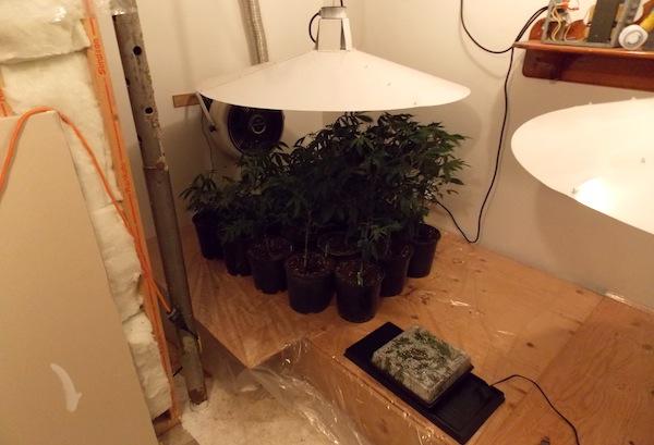 Wellwood Marijuana Grow-Op