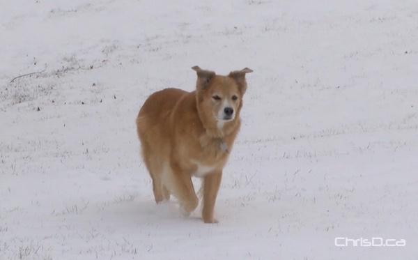 Dog - Snow