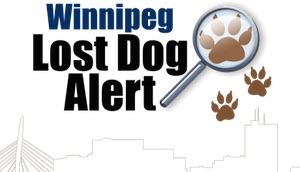 Winnipeg Lost Dog Alert