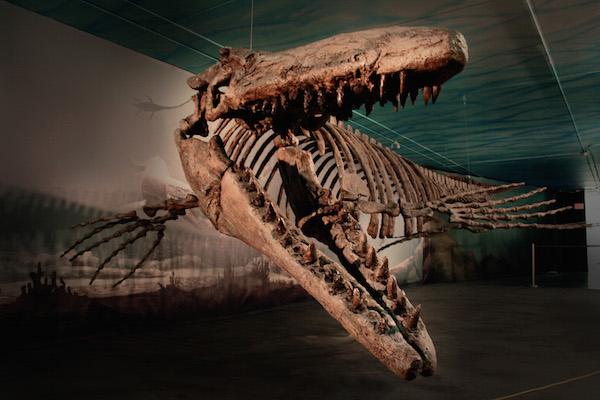 Bruce - Mosasaur
