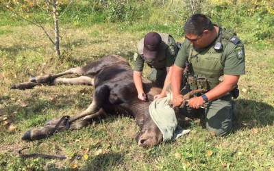 Loose Moose Tranquilized Near Investors Group Field