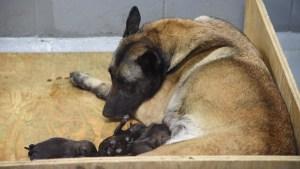 K9 Unit Puppies