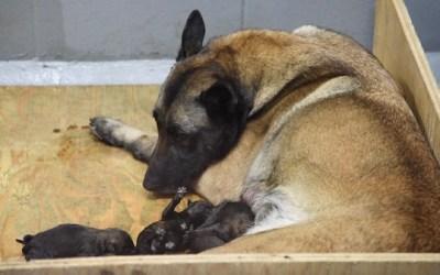 Winnipeg Police Launch Fundraiser for Canine Memorial