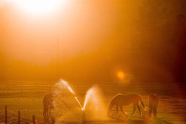 Horses Sunset