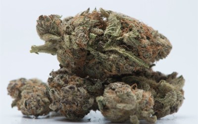 Medical Marijuana Courier Carjacked in Winnipeg